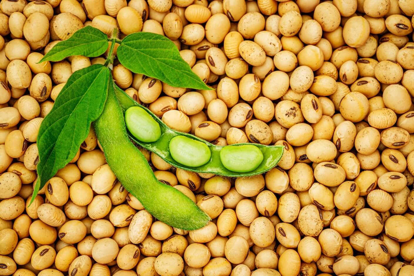 What is the Comparison between Soybean and Soybean Meal