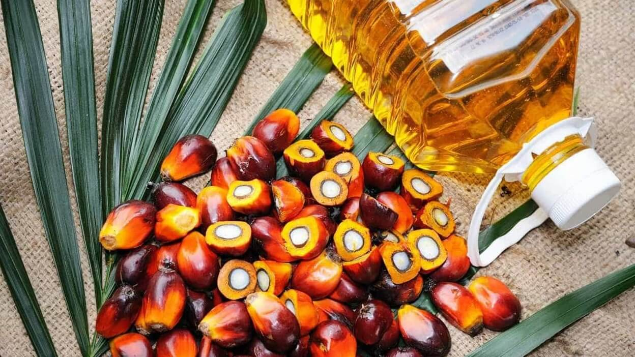 Indonesia is the Largest Producer of Palm Oil in the World