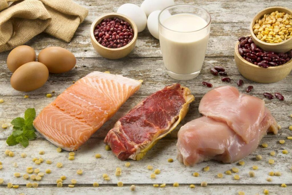 The Difference between Vegetable Protein and Animal Protein