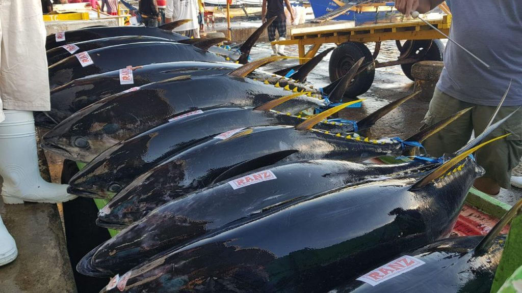 7 Largest Fish Producing in Indonesia That You Need To Know