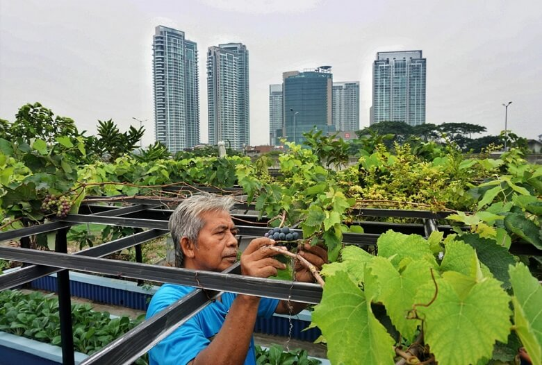 How to Become a Farmer with No Money like an Urban Farming