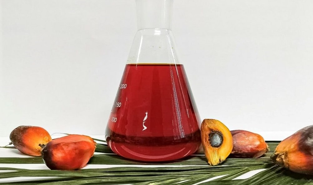 How to Make and Produce Crude Palm Oil in Indonesia