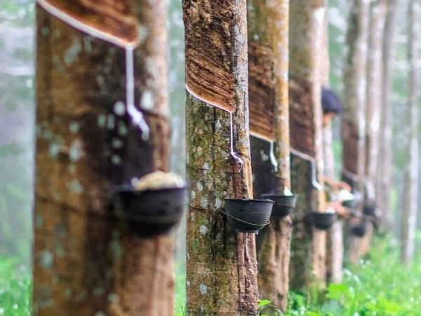 Rubber Industry National Priority Design for Industrial Development