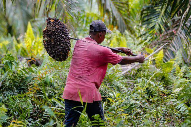 Palm Oil Indonesia Has Led To Some Consumer Backlash
